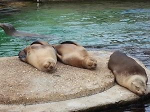Da waren die Seelöwen noch am chillen.